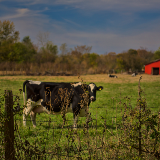 Rural Missouri. Photograph by Gary Adams.
