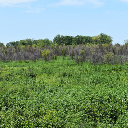 Pershing Park Prairie Land. Photograph by Wendy Littrell.