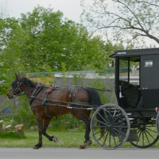 Simple Mode of Transportation. Photograph by Ingrid Palmore. **Selected for the My Missouri 2021 exhibition**