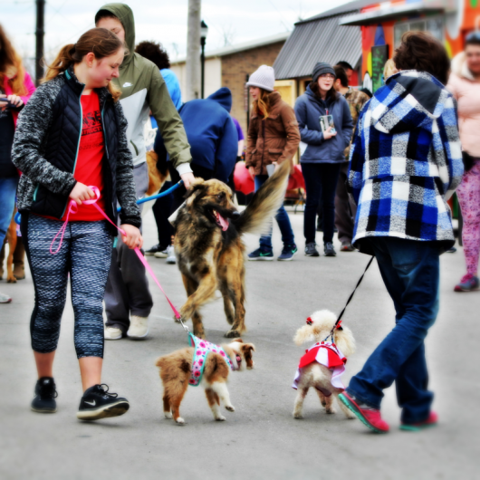 """Dog"" - walk at Old Drum Festival. Photograph by Vinh Phan."