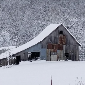 Orrick Barn. Photograph by Robert Wheeldon.