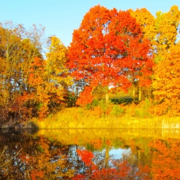 My Fall Pond and Cattail. Photograph by Loita Anderson.