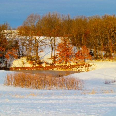 Pond and Elderberry Patch Snow. Photograph by Loita Anderson. **Selected for the My Missouri 2021 exhibition**