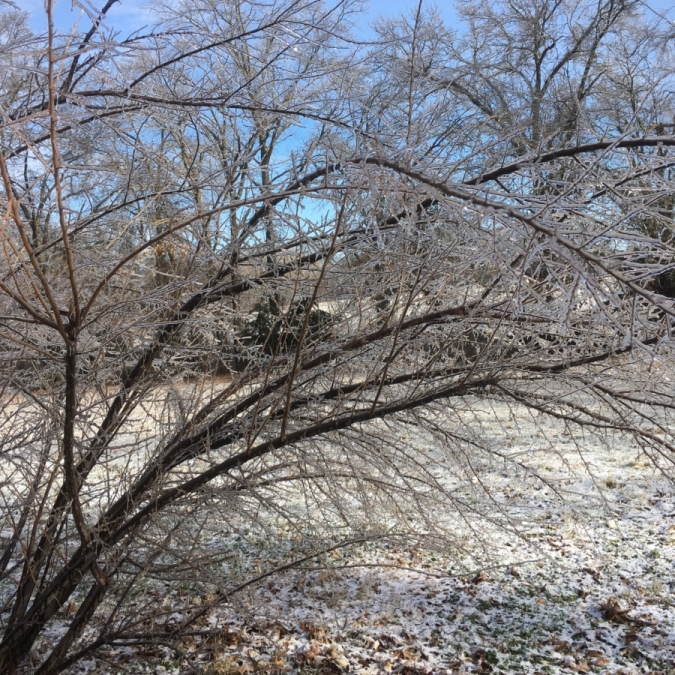 Frost. Photograph by Nerissa Ayers.