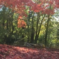 Fall Colors in Missouri. Photograph by Nerissa Ayers.