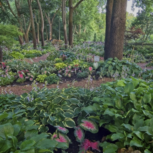Hosta Garden at Close Memorial Park. Photograph by James Braun.