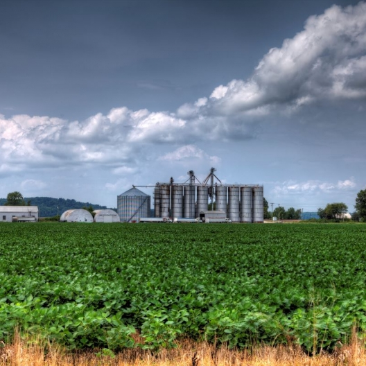 Beans and Bins. Photograph by Larry Braun. **Selected for the My Missouri 2021 exhibition**