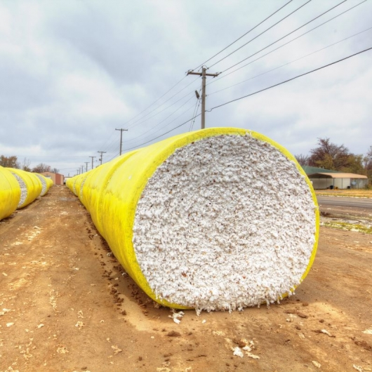 Cotton Is King. Photograph by Larry Braun. **Selected for the My Missouri 2021 exhibition**