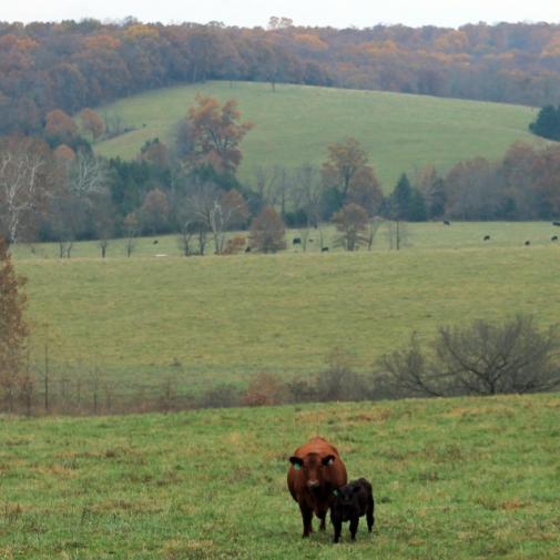 Maries County Rolling Hills