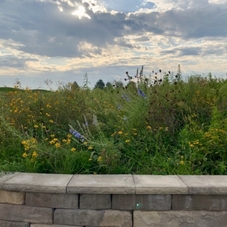 The Gardens at Hedrick Medical Center: Meadow. Photograph by Lindy Chapman.