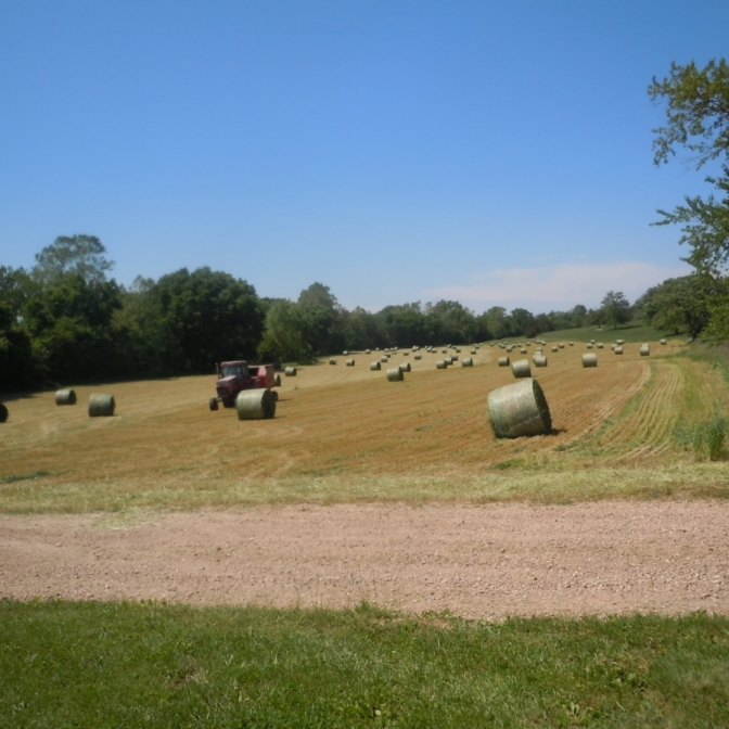 Second Phase of Hay Cutting. Photograph by Mary Ruth Deeken.
