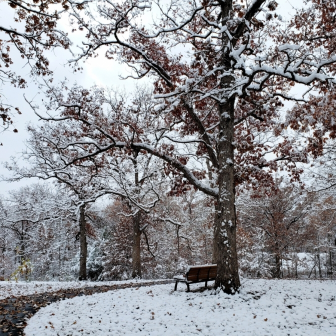 Snowfall. Photograph by Heather Ducote. **Selected for the My Missouri 2021 exhibition**
