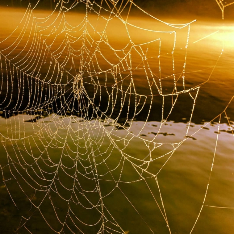 Web of Dew. Photograph by Justin Elderbaum.