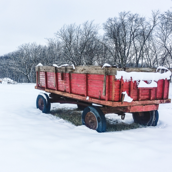 Old Red Wagon. Photograph by Heather Emmendorfer.