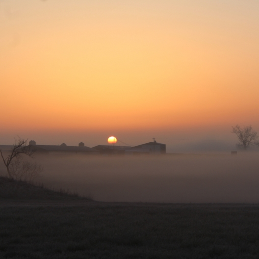 Misty Morning. Photograph by Susan Griffith. **Selected for the My Missouri 2021 exhibition**