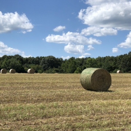 Hay Season. Photograph by Kara Harker.