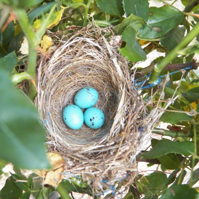 The Nest. Photograph by Lisa Jones.
