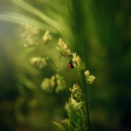Ladybug. Photograph by Terri Kelly. **Selected for the My Missouri 2021 exhibition**