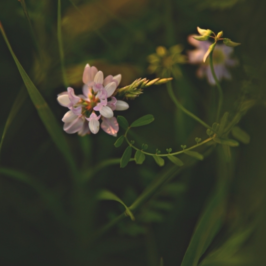 Wildflower. Photograph by Terri Kelly. **Selected for the My Missouri 2021 exhibition**