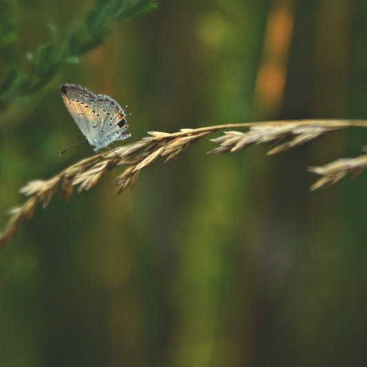 Blue Butterfly. Photograph by Terri Kelly.