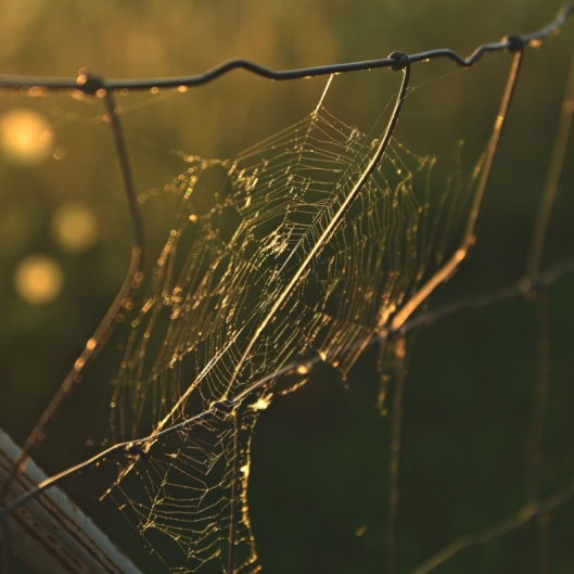 Sunset Spiderweb. Photograph by Terri Kelly.
