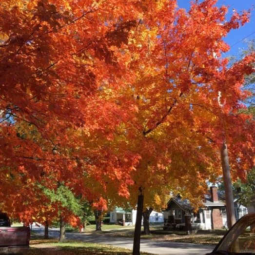 Fall is in the Air. Photograph by Linda Maupin.