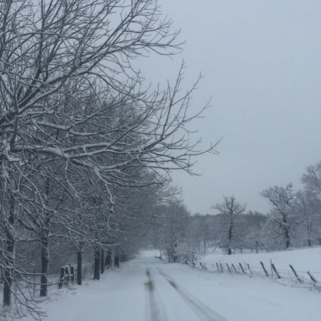 New Snow. Photograph by Sharon Murphy.
