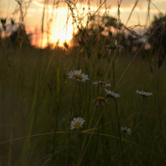 Grass Fields And Sunsets. Photograph by Hope Murray.