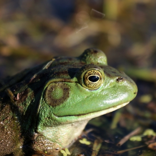 Eye Of the Frog. Photograph by Molly Riley.