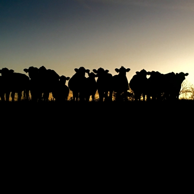 Goodnight Ladies. Photograph by Torrie Roodhouse. **Selected for the My Missouri 2021 exhibition**