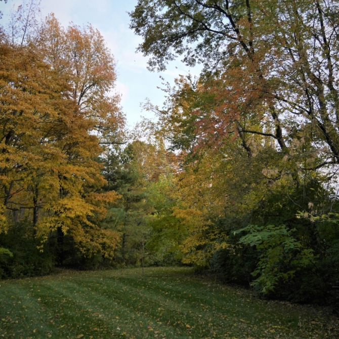 The Fall Nature Colors In St. Peters, Mo. Photograph by Debbie Santagato.