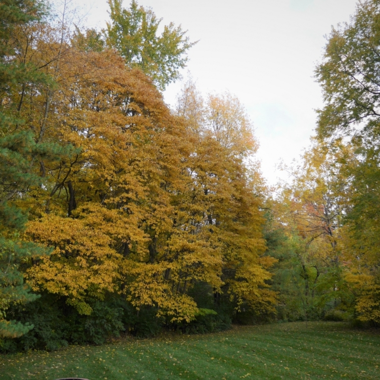 Colorful Sassafras And Other Fall Trees. Photograph by Debbie Santagato.