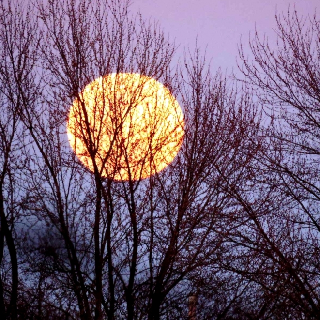 Ozark Moon. Photograph by Sue Seibel.