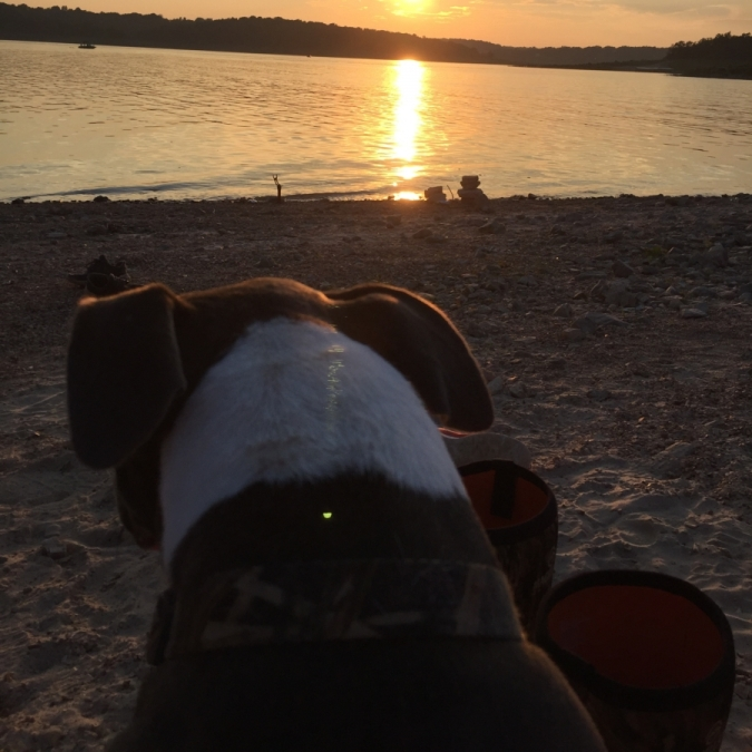 Lake Dog. Photograph by Mia Shelton.