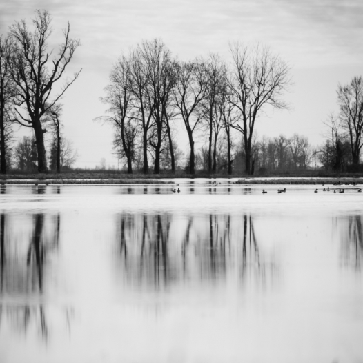 Stillness. Photograph by Christina Wheeler. **Selected for the My Missouri 2021 exhibition**